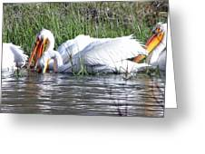 Pelicans Working The Shallows Greeting Card