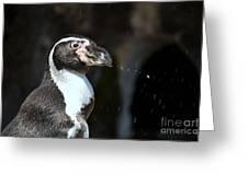 Penguin Splash Greeting Card