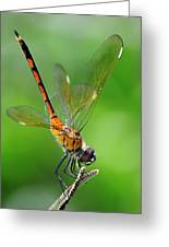 Pennant Dragonfly Obilisking Greeting Card