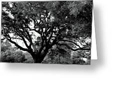 Pensacola Lighthouse Tree Greeting Card