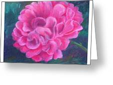 Peony - Indiana State Flower Greeting Card