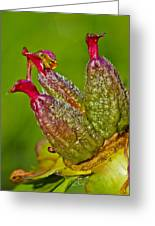 Peony Fruit Greeting Card