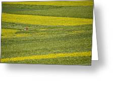 People In A Rapeseed Field Greeting Card by David Evans