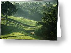 People Walking Through Lujeri Tea Greeting Card