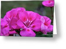 Pepto Pink Greeting Card