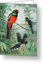 Perched And Flying Trogons Are Seen Greeting Card