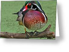 Perched Wood Duck Greeting Card