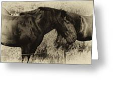 Percheron Prairie Horses Greeting Card