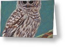 Perching Spotted Owl Greeting Card by Thomas Maynard