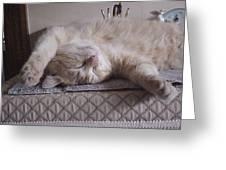 Percy Cat Sleep Stylist Greeting Card