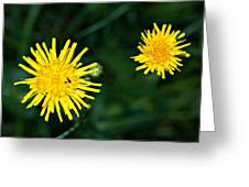 Perennial Sow-thistle Greeting Card