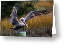 Perfect Pelican Greeting Card
