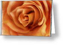 Perfection In Peach Greeting Card