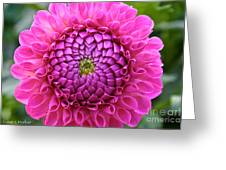 Perfection In Pink Greeting Card