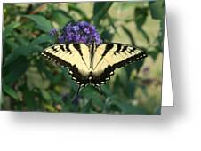 Perfectly Aligned Butterfly On Butterfly Bush Greeting Card