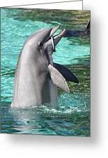 Performing Dolphin Greeting Card
