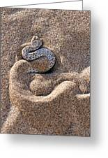 Peringuey's Adder Burying Itself In Sand Greeting Card