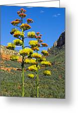 Perry's Agave Greeting Card