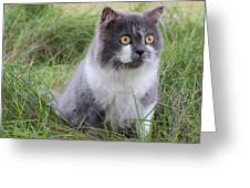 Persian Cat Sit In Green Yard Greeting Card by Nawarat Namphon