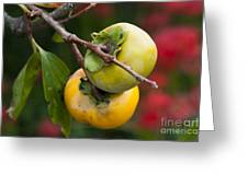 Persimmon Greeting Card