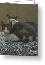 Peso And Pancho Portrait Greeting Card