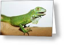 Pet Iguana Greeting Card