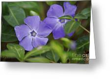 Petal Me Purple Greeting Card