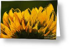Petales De Soleil - A41b Greeting Card by Variance Collections
