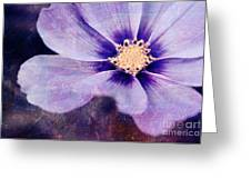 Petaline - 06bt04b Greeting Card