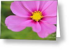 Petaline - P01a Greeting Card