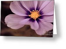 Petaline - P04d Greeting Card