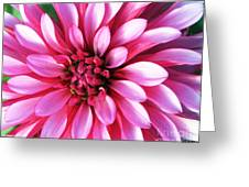 Petals 2 Greeting Card