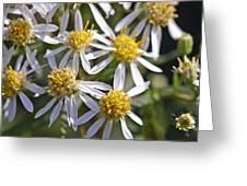 Petals Greeting Card
