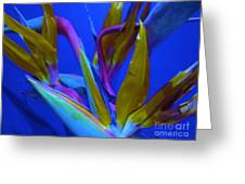 Petals From Paradise Greeting Card