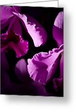 Petals Galore Greeting Card