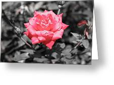 Petals In A Sea Of Gray Greeting Card