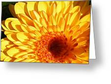 Petals Of Yellow Greeting Card