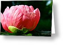 Petals Up Greeting Card