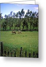 Petaluma Pasture Greeting Card