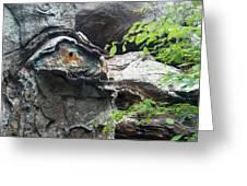 Petrified Prehistoric Monster In Arkansas Greeting Card by Douglas Barnett