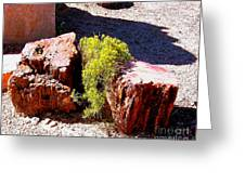 Petrified Tree Stumps In Arizona Greeting Card