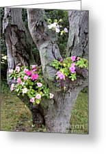 Petunia Tree Greeting Card