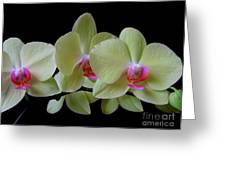 Phalaenopsis Fuller's Sunset Orchid No 1 Greeting Card
