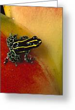 Phantasmal Poison Dart Frog Greeting Card