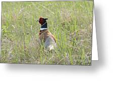 Pheasant In The Grass Greeting Card