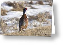 Pheasant In The Winter Greeting Card