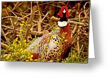 Pheasant Greeting Card