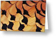 Pheasant Plumage Greeting Card