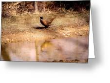 Pheasant Stroll Greeting Card