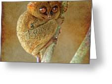 Philippine Tarsier Greeting Card